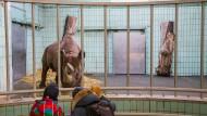 Tristes Aussichten: Das Nashorngehege liefert gute Argumente für einen Standortwechsel.