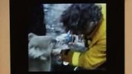 Koala-Dame Sam entkommt den Flammen