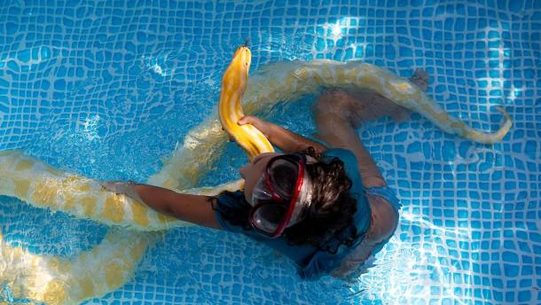 Achtjährige schwimmt mit Riesen-Python