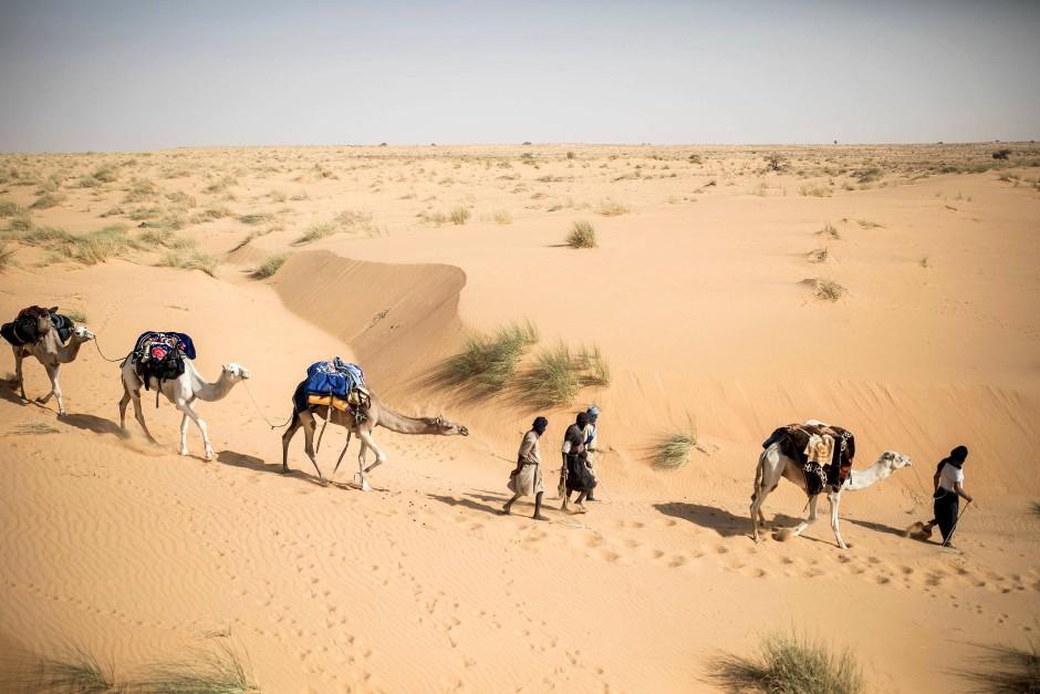 Der Archäologe Thierry Tillet durchquert die Wüste in Begleitung seiner Karawane von Kamelen und Helfern. Hunderte von Bildern von Felskunst, die verschiedene Tiere und Jagdszenen darstellen, sind in diesen Gebieten entdeckt worden.