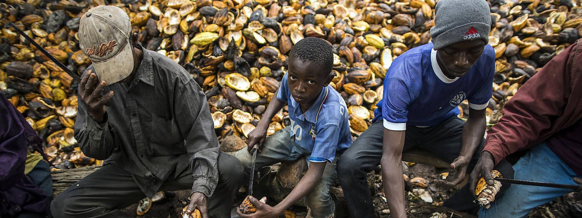 Werden Schokoladenhersteller künftig für Kinderarbeit haften?