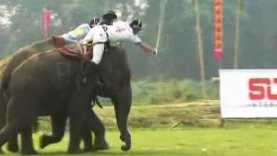 Rasantes Spiel beim Elefanten-Polo