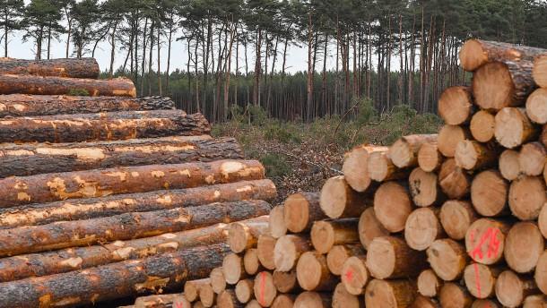 EU-Millionen für Baumringforscher