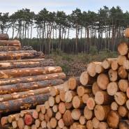 Blick in die Vergangenheit: Anhand der Baumringe lässt sich das Klima vergangener Epochen rekonstruieren (Symbolbild).