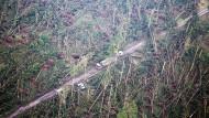 Abgestorbenes Waldgebiet im niedersächsischen Opperhausen: Waldarbeiter kümmern sich um die umgestürzten Bäume.