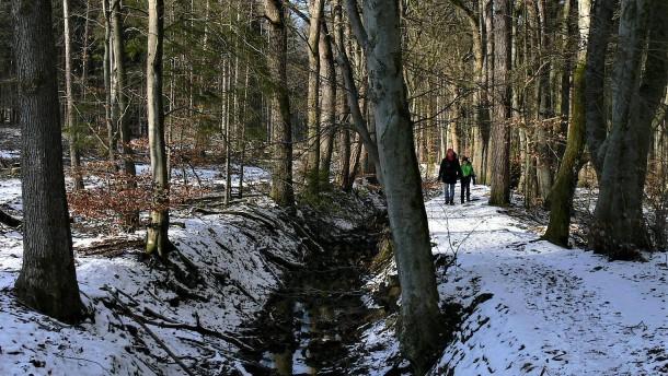Im Wald versteckte Wälle
