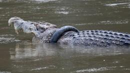 """Neuer Anlauf zur Rettung des """"Reifen-Krokodils"""""""