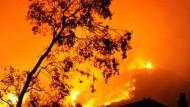 Waldbrand in Kalifornien unter Kontrolle