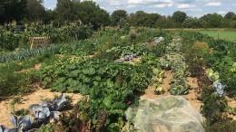 Saisongärten liegen im Trend