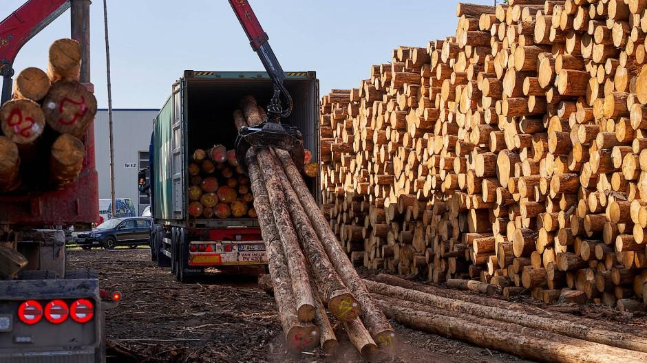 Im rheinland-pfälzischen Wissen wird Fichtenholz zum Transport nach China in Überseecontainer verladen.