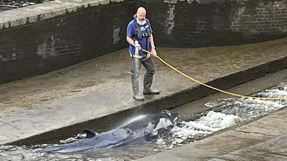 Ein Helfer versucht den Wal mit einem Wasserschlauch nass zu halten.