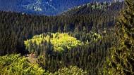Gefährdete Ressource: der deutsche Wald