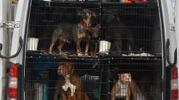 30 Hunde und Katzen aus illegalem Tiertransport befreit