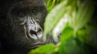 Arten sterben 1000 Mal schneller aus
