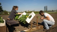 Pioniergeist: Die Kooperative, die ein Abo für Obst und Gemüse anbietet, hat es bis ins Finale geschafft.