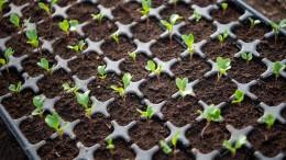 So gedeiht Gemüse im eigenen Garten