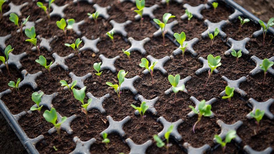 Anzuchtkasten, Einzeltopf oder direkt auf's Feld: Jede Pflanze hat andere Bedürfnisse.