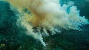 Zerstörung des Amazonas nimmt rasant zu