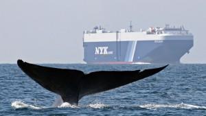 Ein Blauwal ist tausend Bäume wert