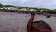 Regierung Obama nimmt BP in die Zange
