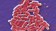 Klein, aber oho: Escherichia-coli-Bakterien könnten der Durchbruch für Impfforschung sein.
