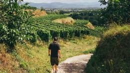 """""""Der Sauvignon Blanc hat keine Berechtigung mehr"""""""