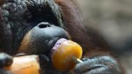 Affen-Eis gegen Affenhitze