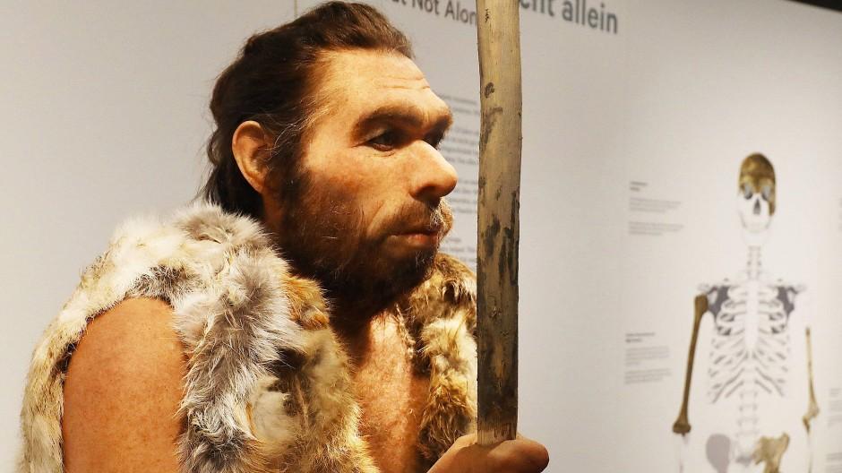 Eine Neandertaler-Rekonstruktion im LVR-Landesmuseum in Bonn