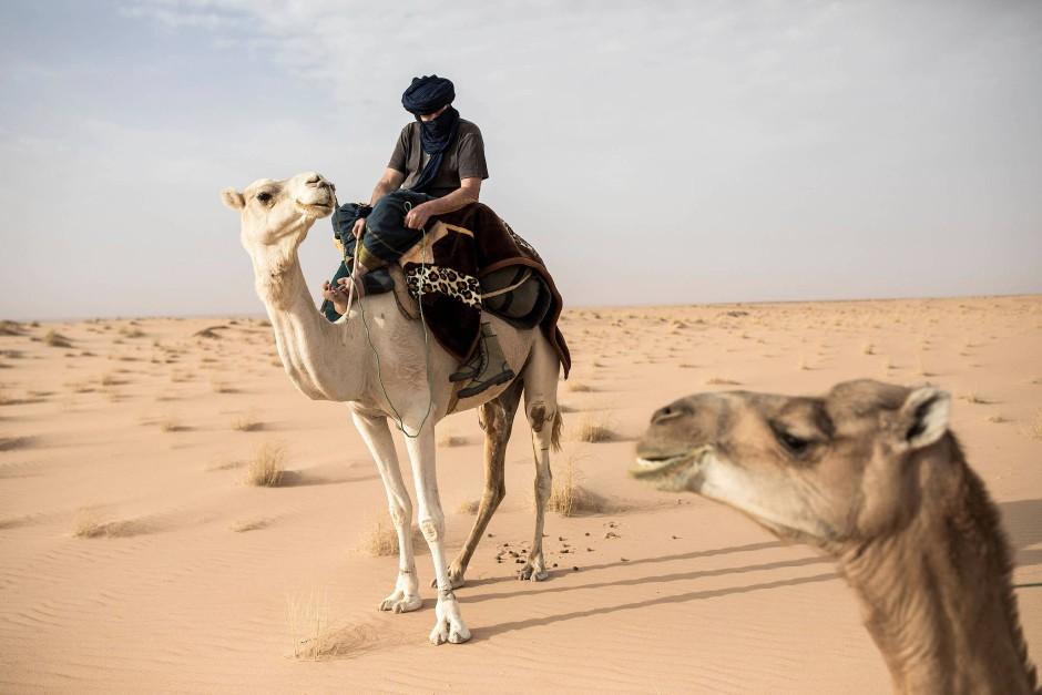 Unterwegs auf vier Beinen: Der Archäologe Thierry Tillet auf seinem Kamel zwischen Tichitt und Aratane.