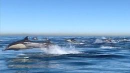 Tausende Delfine auf der Flucht