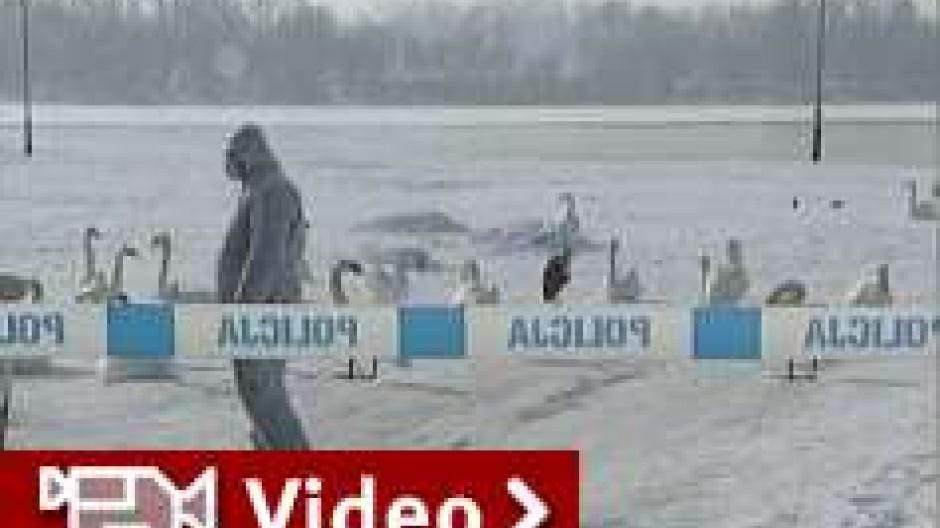 Alarmstimmung: Vogelgrippe dringt weiter vor