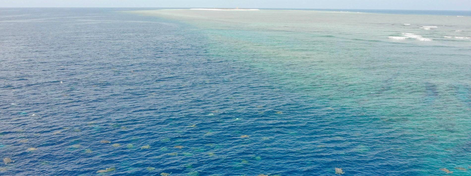 Drohnenbilder zeigen tausende Schildkröten vor Australien