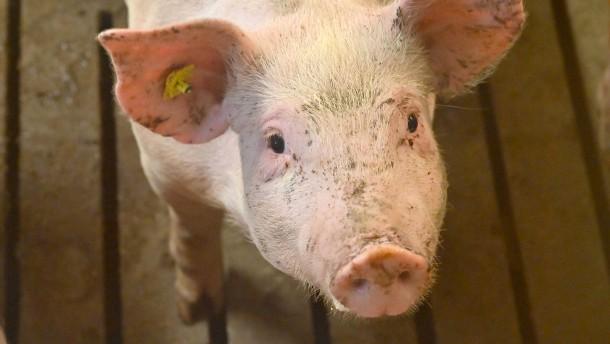 Fachleute empfehlen Steuer auf Fleisch und Milch
