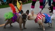 Hunde feiern Halloween