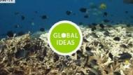 Korallenschutz in Papua