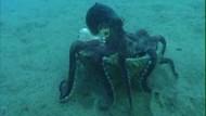Kraken als Ritter der Kokosnuss