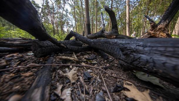 Ministerium warnt vor erhöhter Waldbrandgefahr in Hessen