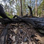 Verkohltes Holz nach einem Waldbrand in Frankfurt: Auch 2020 stehen Hessen trockene Zeiten bevor.