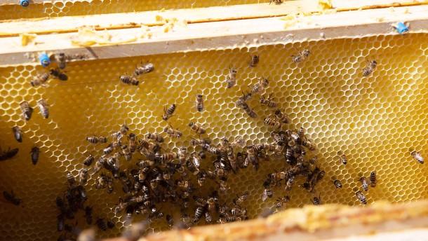 Bio-Honig aus den Bergen