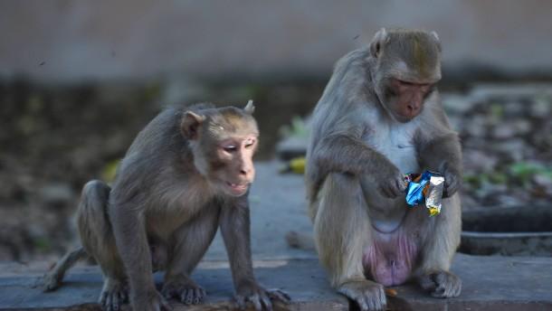 Affen erobern Neu Delhi