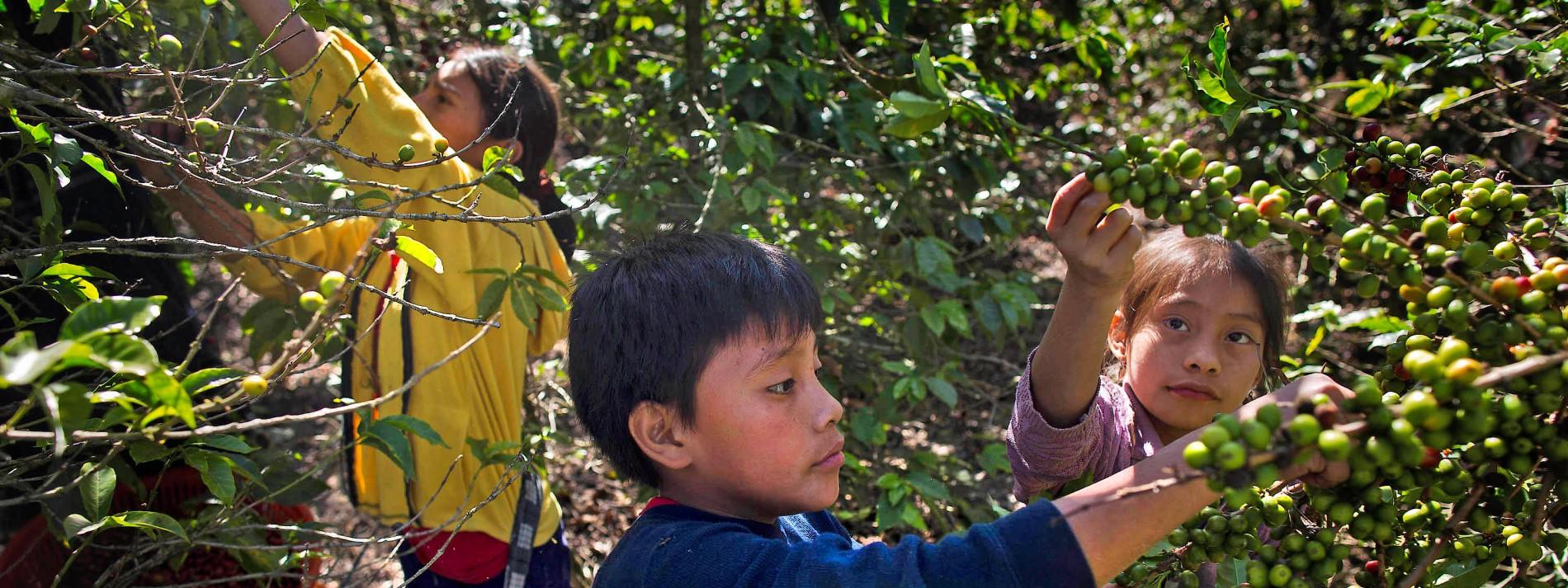 Kaffee aus Kinderhand