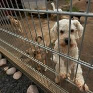 Hunde schauen aus ihrem Gehege im Tierheim. Viele stammen von unbekannten Züchtern aus dem Internet.