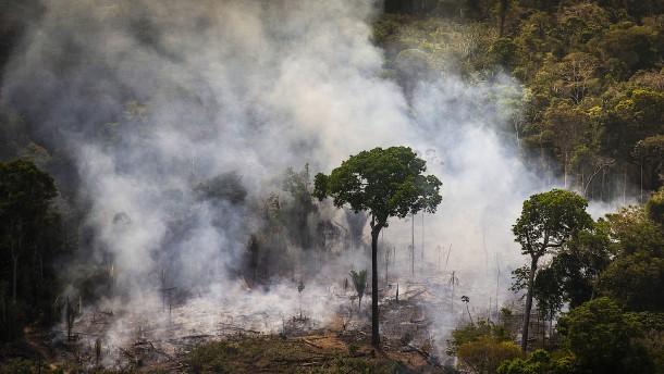 Rund ein Drittel der Baumarten ist vom Aussterben bedroht