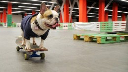 Hündin Sonja kann Skateboard fahren