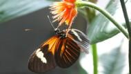 Zweckgemeinschaften unter Schmetterlingen