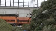 Alte Weihnachtsbäume sorgen in Berlin für warme Stuben