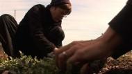 In der Krise setzen Hobby-Gärtner auf selbst gezogenes Gemüse