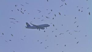 Airbus muss nach Kollision mit Vögeln umdrehen