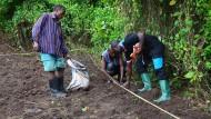 Die einheimischen Feldarbeiter setzen die Weinreben, für die Genauigkeit nutzen sie ein Seil, um eine gerade Linie zu ziehen.
