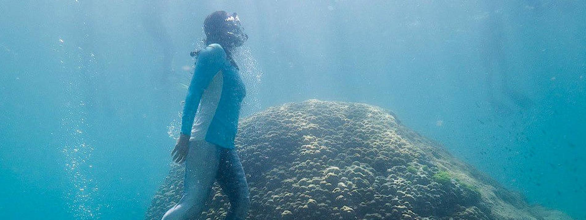Gewaltige Koralle im Great Barrier Reef entdeckt
